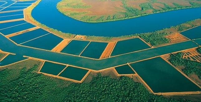 Pêche et élevage de crevettes : l'inquiétant déclin de l'or rose