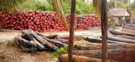 12.000m3 de bois de rose exportés illégalement en 2014