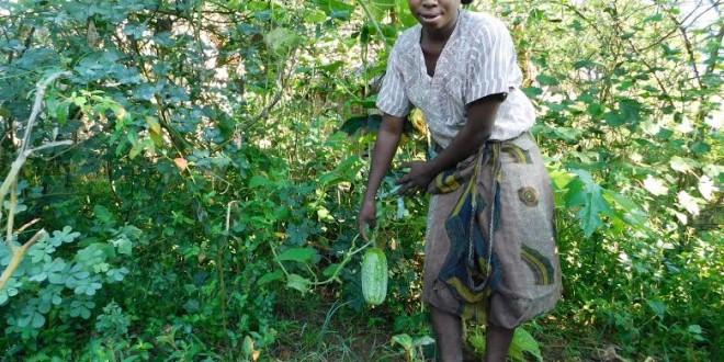 Des paysans bénéficient d'équipements agricoles